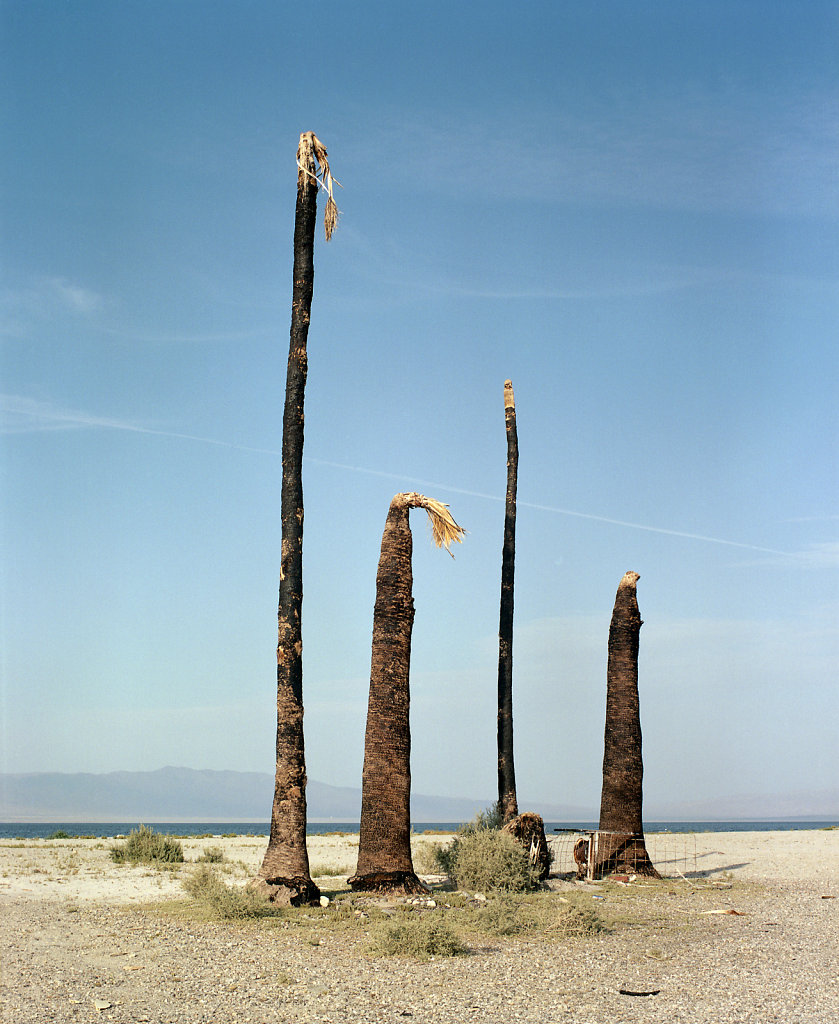 Two Bent and Two Tipless Palms